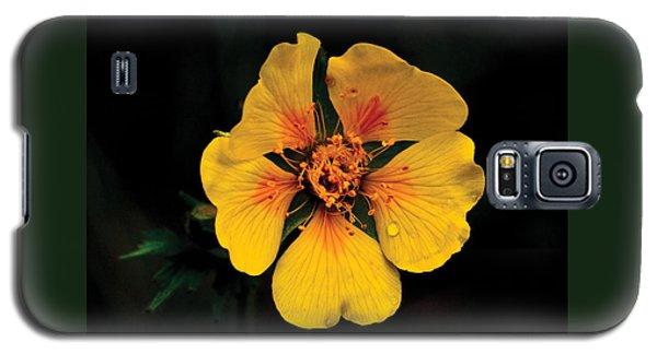 Avens Flower Galaxy S5 Case