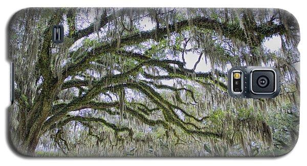 Avery Island Oak Galaxy S5 Case