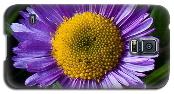 Galaxy S5 Case featuring the photograph Awesome Daisy by Steven Reed