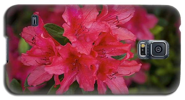 Azaleas 1 Galaxy S5 Case by Penny Lisowski