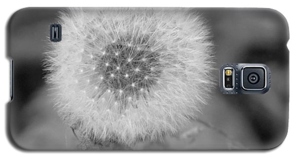 B And W Seed Head Galaxy S5 Case