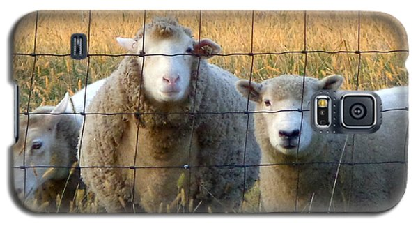 Galaxy S5 Case featuring the photograph Baaaaa by Joseph Skompski