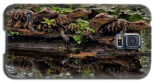 Baby Alligators Reflection Galaxy S5 Case by Dan Sproul