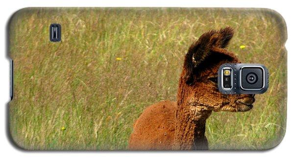 Baby Alpaca Galaxy S5 Case