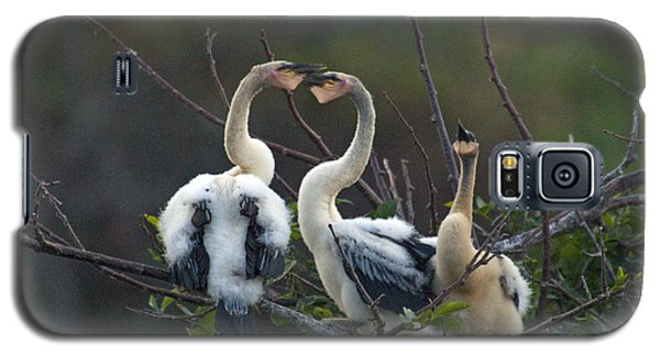 Baby Anhinga Galaxy S5 Case by Mark Newman