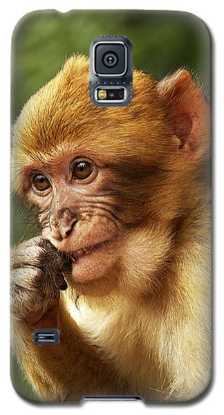 Galaxy S5 Case featuring the photograph Baby Barbary Macaque by Selke Boris