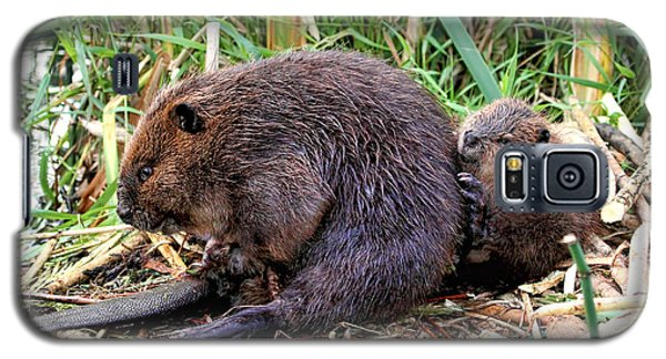 Baby Beaver With Mother Galaxy S5 Case by Peggy Collins
