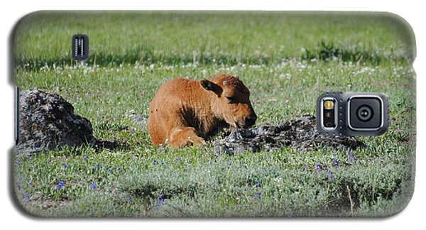 Baby Bison Napping Galaxy S5 Case