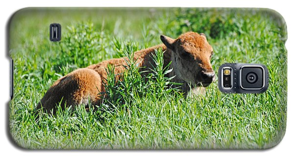 Baby Bison Galaxy S5 Case
