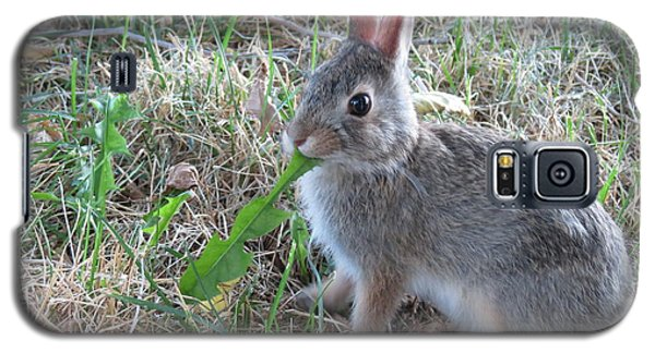 Baby Bunny Eating Dandelion #01 Galaxy S5 Case by Ausra Huntington nee Paulauskaite