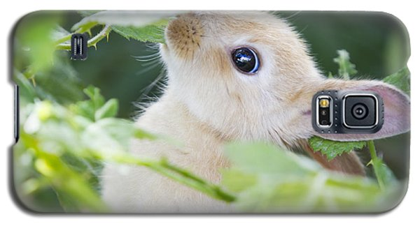 Baby Bunny Galaxy S5 Case