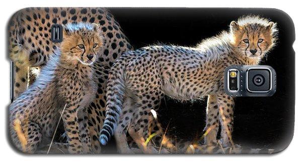 Cheetah Galaxy S5 Case - Baby Cheetahs by Jun Zuo