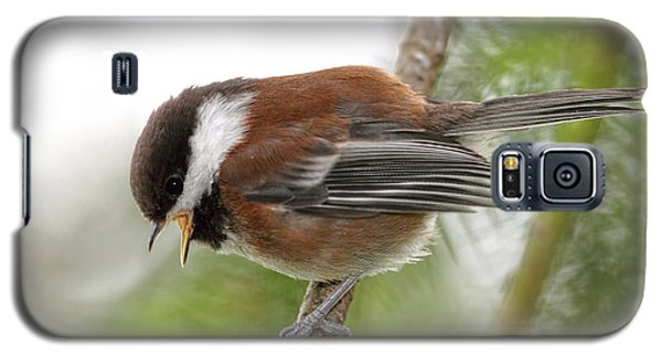 Galaxy S5 Case featuring the photograph Baby Chickadee Calling For Mom by Peggy Collins