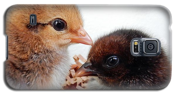 Baby Chicks Galaxy S5 Case