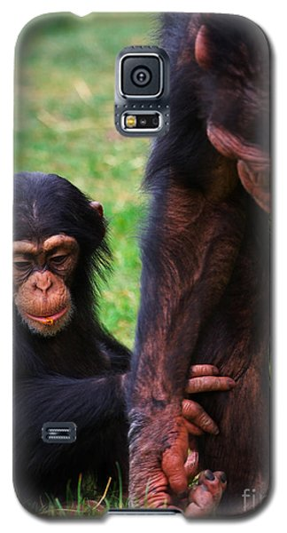 Galaxy S5 Case featuring the photograph Baby Chimp With Mother by Nick  Biemans