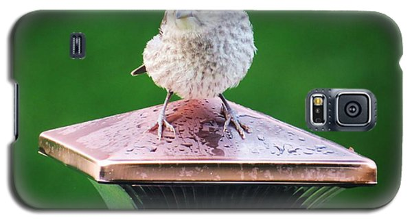 Galaxy S5 Case featuring the photograph Baby Cowbird by Judy Via-Wolff