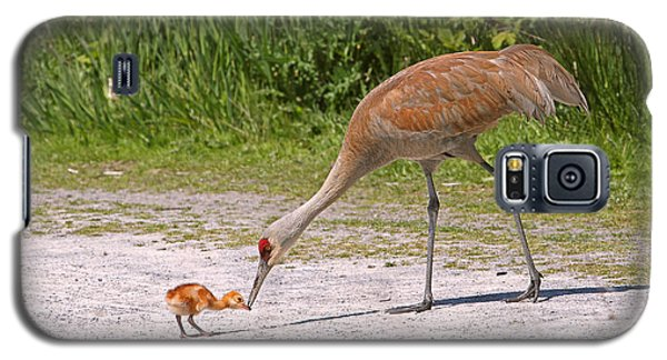 Baby Crane With Mother Galaxy S5 Case