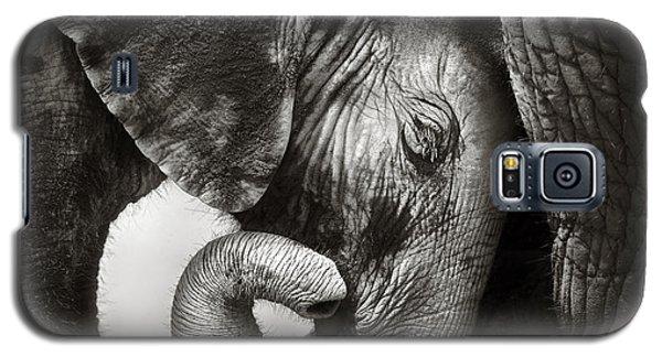 Wildlife Galaxy S5 Case - Baby Elephant Seeking Comfort by Johan Swanepoel