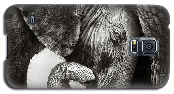 Cow Galaxy S5 Case - Baby Elephant Seeking Comfort by Johan Swanepoel