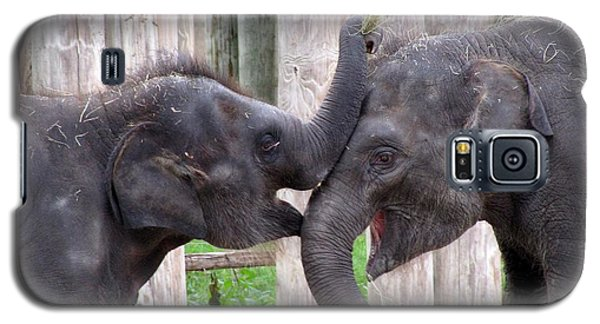 Baby Elephants - Bowie And Belle Galaxy S5 Case