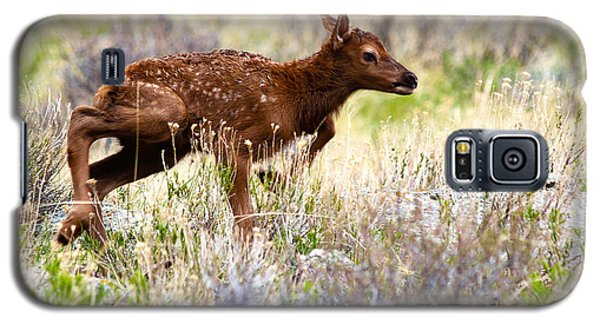 Baby Elk Galaxy S5 Case