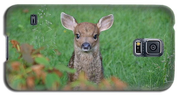 Galaxy S5 Case featuring the photograph Baby Fawn In Yard by Kym Backland