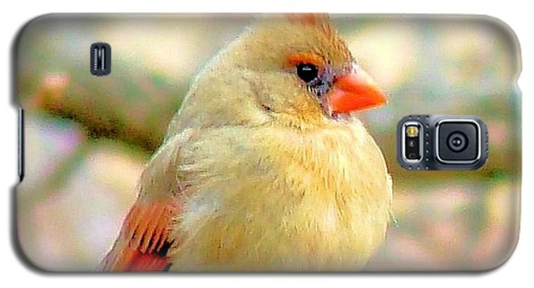 Galaxy S5 Case featuring the photograph Baby Female Cardinal by Janette Boyd