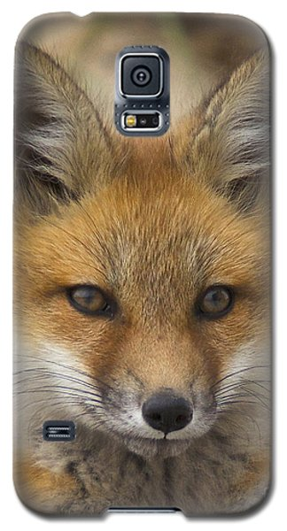 Baby Fox  Galaxy S5 Case by Amazing Jules