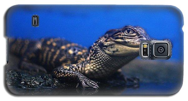 Baby Gator Galaxy S5 Case