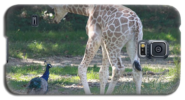 Baby Giraffe And Peacock Out For A Walk Galaxy S5 Case by John Telfer