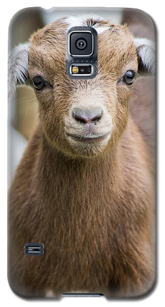 Baby Goat Galaxy S5 Case by Shelby  Young