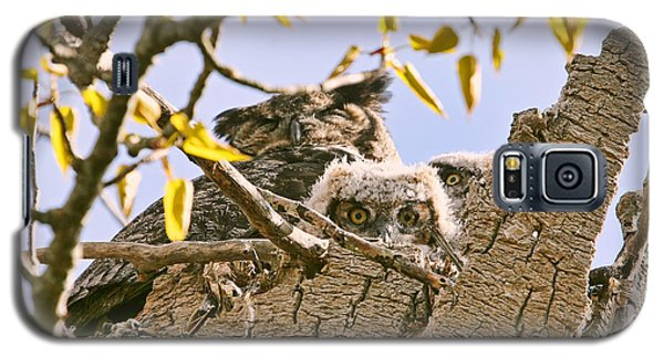 Galaxy S5 Case featuring the photograph Baby Great Horned Owls In Nest by Peggy Collins
