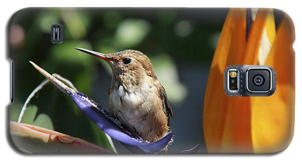 Baby Hummingbird On Flower Galaxy S5 Case