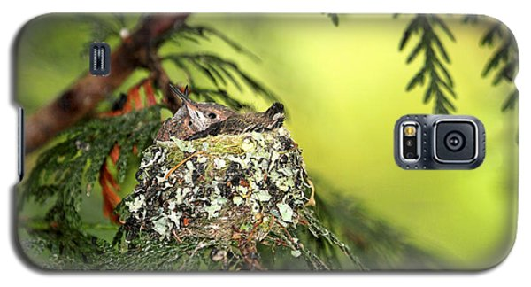 Baby Hummingbirds In A Nest Galaxy S5 Case by Peggy Collins