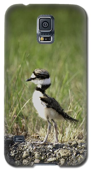 Baby Killdeer 2 Galaxy S5 Case by Thomas Young