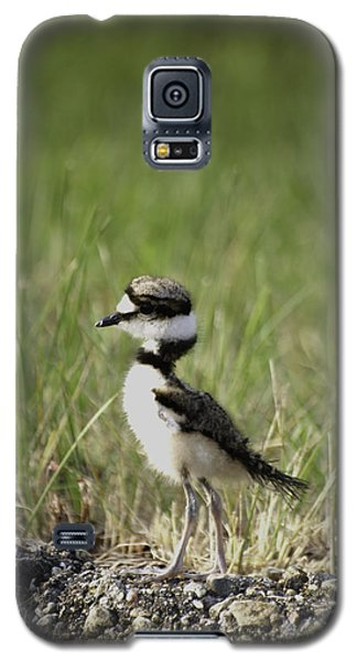 Baby Killdeer 2 Galaxy S5 Case