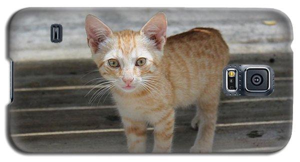 Baby Kitty Galaxy S5 Case