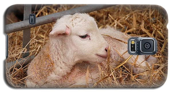 Baby Lamb Galaxy S5 Case