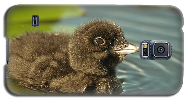 Galaxy S5 Case featuring the photograph Baby Loon by James Peterson