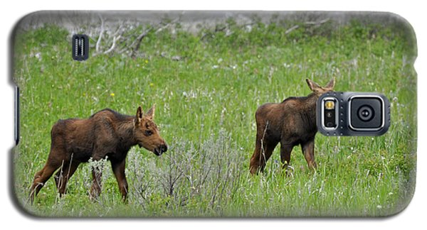 Baby Moose On The Banks Of The Gallatin Galaxy S5 Case