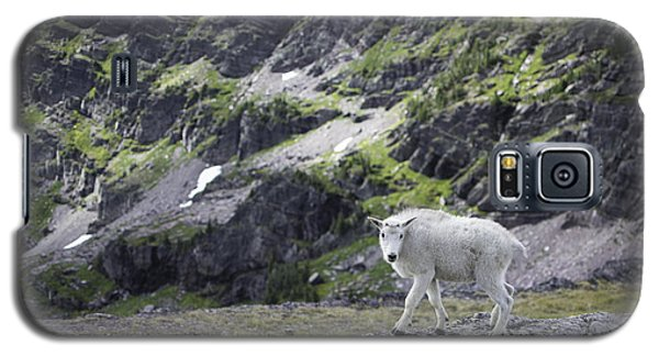 Baby Mountain Goat At Comeau Pass Galaxy S5 Case