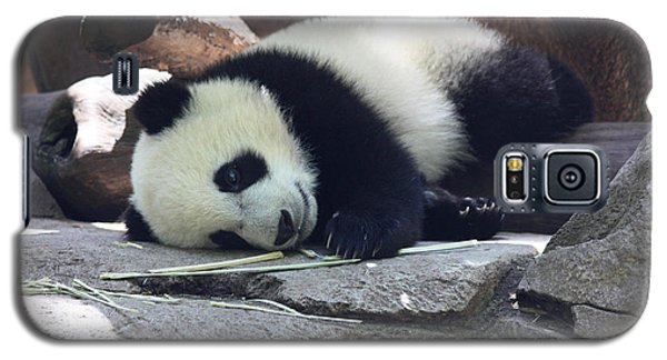 Galaxy S5 Case featuring the photograph Baby Panda by John Telfer