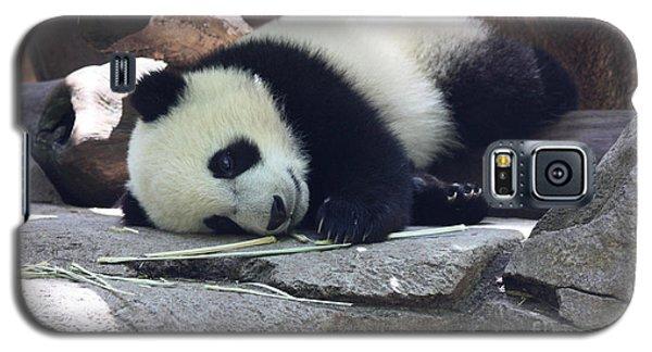 Baby Panda Galaxy S5 Case