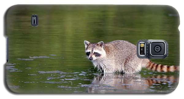 Baby Raccoon In Green Water Galaxy S5 Case