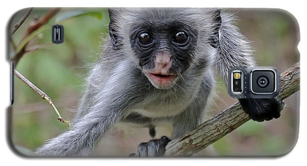 Baby Red Colobus Monkey Galaxy S5 Case