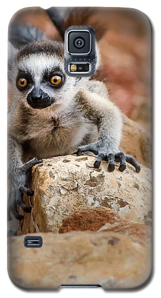 Baby Ringtail Lemur Galaxy S5 Case by Linda Villers