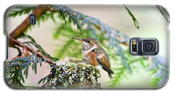 Galaxy S5 Case featuring the photograph Baby Rufous Hummingbird by Peggy Collins