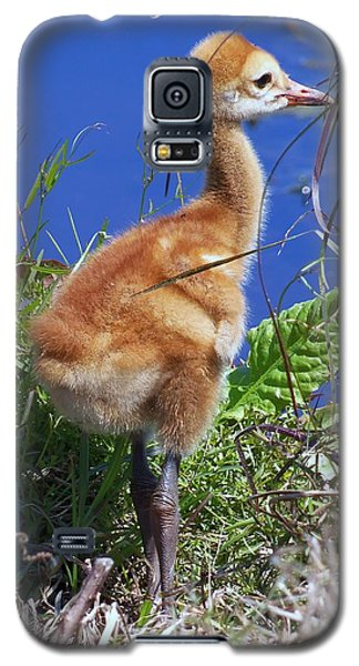 Galaxy S5 Case featuring the photograph Baby Sandhill Crane 064  by Chris Mercer