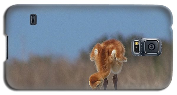 Galaxy S5 Case featuring the photograph Baby Sandhill Crane 072 by Chris Mercer