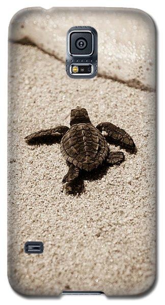 Baby Sea Turtle Galaxy S5 Case by Sebastian Musial
